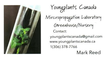 Youngplants Canada